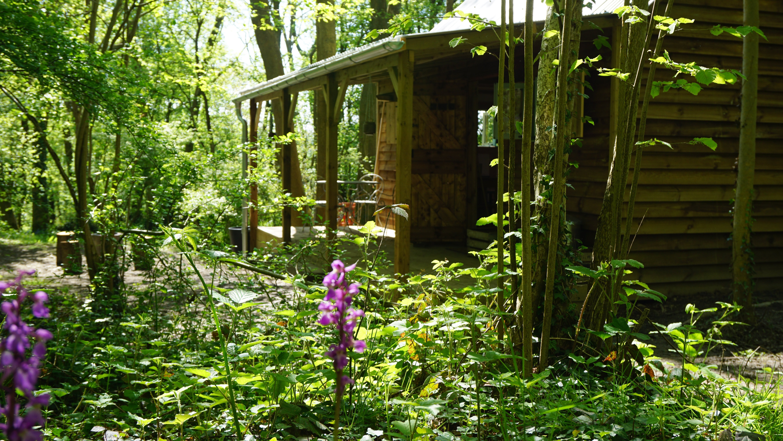 jacaranda cabin