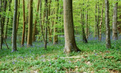 Forests Voted Favourite Natural Feature