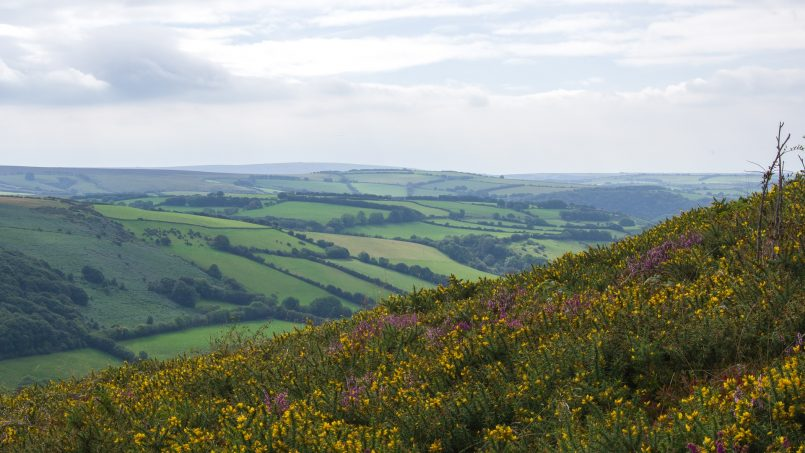 Glamping in Exmoor – The Best Huts & Cabins